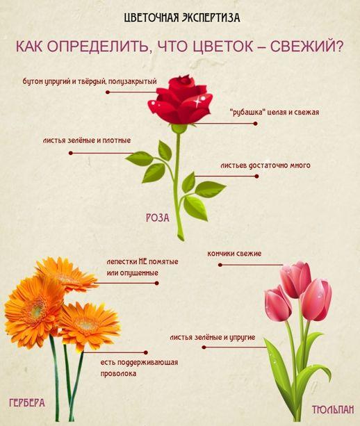 Цветы и значение их цвета при подарке 77